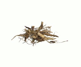 echinacea-purpuraedit