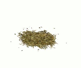 echinacia-angustiflora