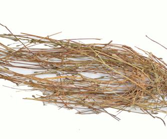 hierba-del-golpe