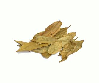 hojas-de-limonedit