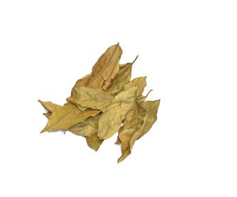 hojasdelimon