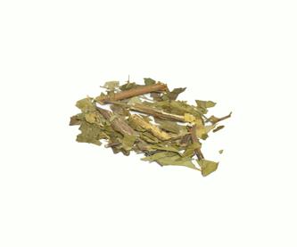 neem-hojas