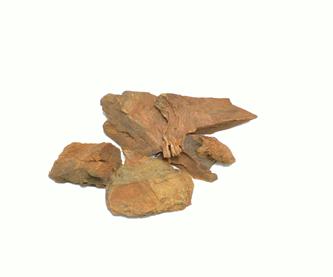 raiz-de-cocolmecaedit