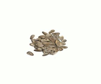 semilla-de-girasol